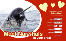Narwhal News Network Ad